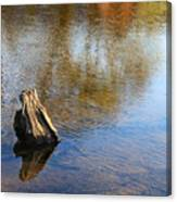 Tree Stump Surrounded By Water Canvas Print
