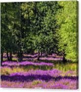 Tree Stumps In Common Heather Field Canvas Print