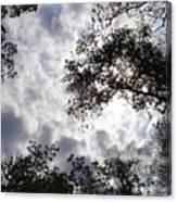 Tree Swirl Canvas Print