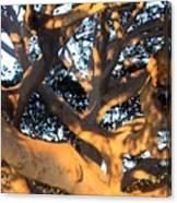 Tree Tangle 0551 Canvas Print