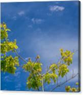 Tree To Sky II Canvas Print