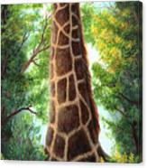 Tree Top Browser Canvas Print