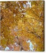 Tree Tops Canvas Print