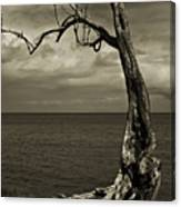 Tree Trunk-1-st Lucia Canvas Print