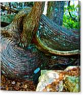 Tree Trunk By Jordan Pond In Acadia National Park-maine Canvas Print