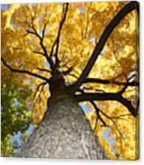 Tree Trunk Canvas Print