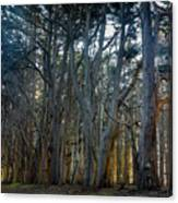 Tree Wall Canvas Print