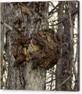 Tree Wart Canvas Print