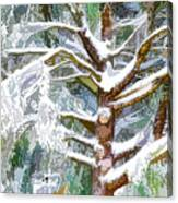 Tree With White Fluffy Snow Canvas Print