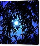 Treed Moon Canvas Print
