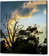Treeline Silhouette Canvas Print