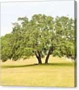 Trees 004 Canvas Print