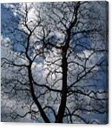 Trees 1 Canvas Print