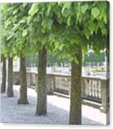 Trees All In A Row Canvas Print
