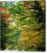 Trees Along The Flumes Trail Canvas Print