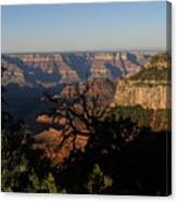 Trees And Canyon Canvas Print