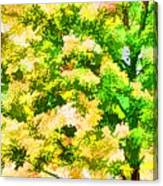 Trees And Leaves 1 Canvas Print