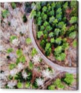 Trees And Path From Above Drone Photography Canvas Print