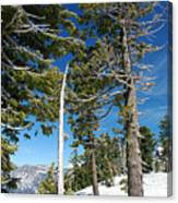 Trees And Snag At Crater Lake Canvas Print