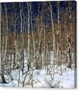 Trees And Something In The Snow Canvas Print