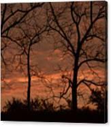 Trees And Sunrise Canvas Print