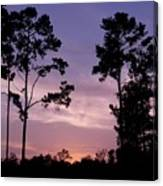 Trees And Sunset Canvas Print