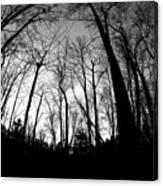 Trees At Dusk Canvas Print