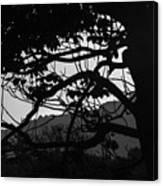 Trees Black And White - San Salvador Canvas Print