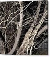 Trees Closeup Canvas Print