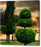 Trees In A Park Of Limassol City Sea Front In Cyprus Canvas Print