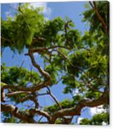 Trees In Bermuda Canvas Print
