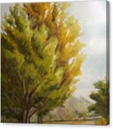 Trees In Boulder Canvas Print