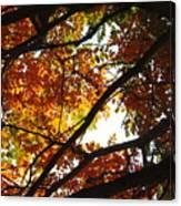 Trees In Fall Fashion Canvas Print