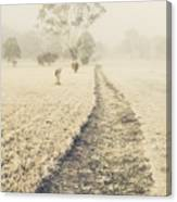 Trees In Fog And Mist Canvas Print