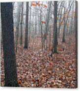 Trees In Foggy Fall Woods Canvas Print