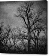 Trees In Storm In Black And White Canvas Print