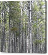 Trees In The Absarokee Beartooth Wilderness Area Canvas Print