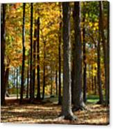 Tree's In The Forest Canvas Print