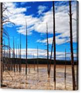 Trees In The Midway Geyser Basin Canvas Print