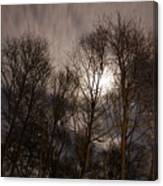 Trees In The Nigh Canvas Print