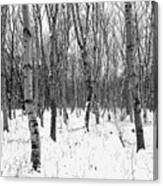 Trees In Winter Snow, Black And White Canvas Print