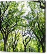 Trees Of Central Park, Nyc Canvas Print