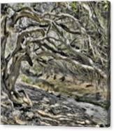 Trees Of Ziarat Canvas Print