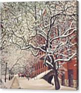 Trees On Franklin Canvas Print