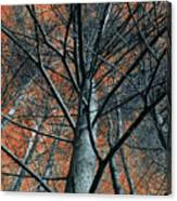 Trees On Red. Canvas Print