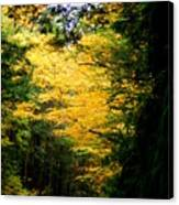 Trees Over The Flumes Gorge Canvas Print