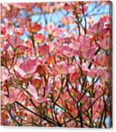 Trees Pink Spring Dogwood Flowers Baslee Troutman Canvas Print