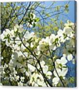 Trees Sunlit White Dogwood Art Print Botanical Baslee Troutman Canvas Print