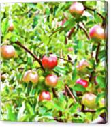 Trees With Red Apples In An Orchard Canvas Print