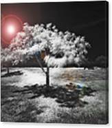 Trees With Science Fiction Sky 91774031 Canvas Print